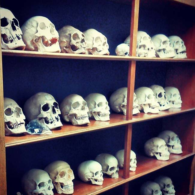 So many skulls to choose from.