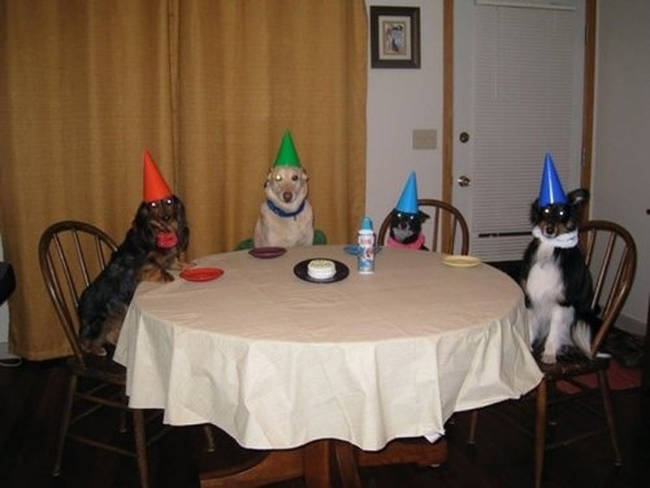 Whoa there. Calm down, you party animals.