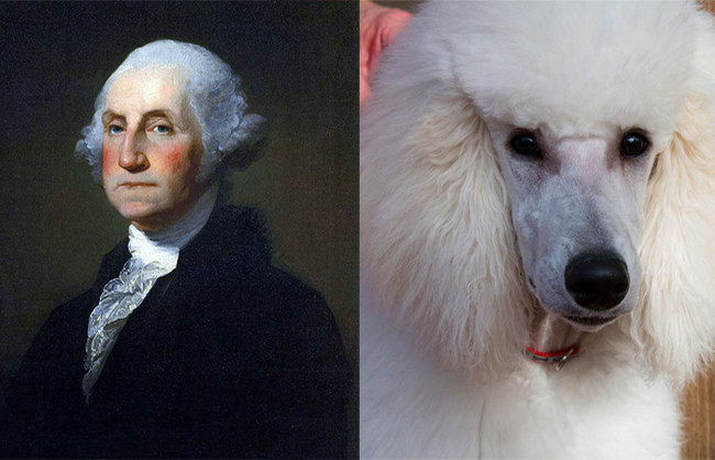George Washington and this standard poodle